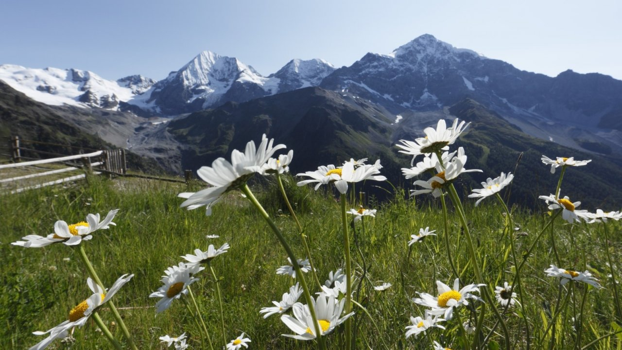 Sommerwiese im Nationalpark Stilfser Joch